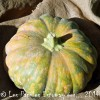 Courge Milk pumpkin logo 400