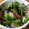 Salade Pourpier radis