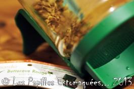 Betterave rouge germes 02