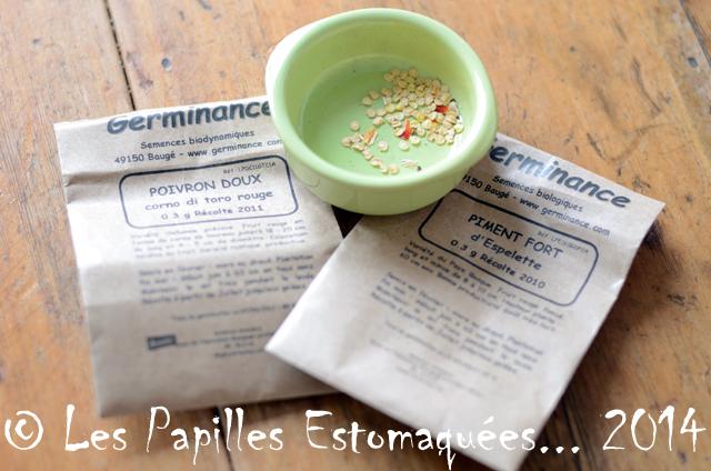 Graines poivrons et piments 01