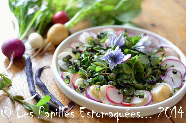 Salade du jour 01